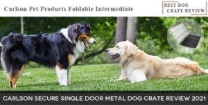 Best-Dog-Crate Review-Carlson-Secure-Single-Door-Metal-Dog-Crate-Reviews-2021