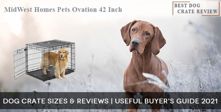 Dog Crate Sizes & Reviews | Useful Buyer's Guide 2021