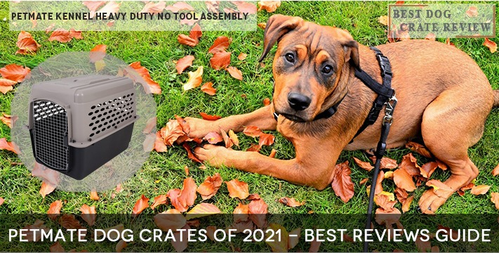 Petmate Dog Crates of 2021 - Best Reviews Guide